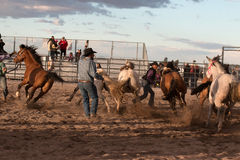 Wild Horses at the Professional Rodeo. Rodeos are very popular in the western states of the United States and in Canada Royalty Free Stock Photography