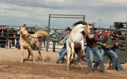 Wild Horses at the Professional Cowboy Rodeo. Rodeos are very popular in the western states of the United States and in Canada Stock Photos