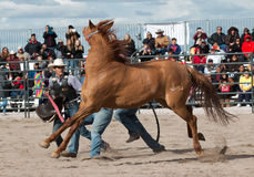 Wild Horses at the Professional Rodeo Stock Image