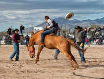 Wild Horses at the Professional Rodeo Stock Photo