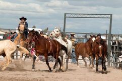 Wild Horses at the Professional Rodeo Stock Photos