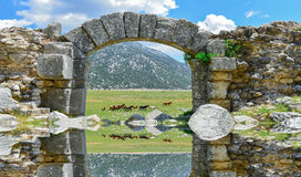 Wild horses in the region and its historical texture Stock Image