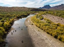 Wild horses in the river. Aerial photo of a river with wild horses stock photography
