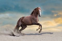 Horse herd run. Wild horses run in dark desert dust stock image