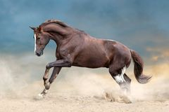 Horse herd run. Wild horses run in dark desert dust royalty free stock images