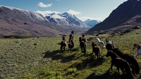 Wild Horses Running. Herd of horses running on the steppes in the background mountain. Sunset