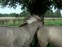 Wild Horses in Slow Motion stock video footage