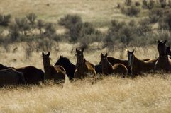 Wild horses standing in tall grass Stock Photos