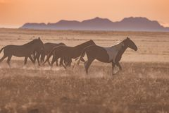 Wild Horses at Sunset stock photography