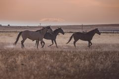 Wild Horses at Sunset Royalty Free Stock Photography