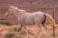 Wild Horses In Utah Royalty Free Stock Image