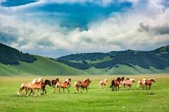 Wild horses in valley near Castelluccio, Umbria Stock Photography