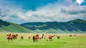 Wild horses in valley near Castelluccio, Umbria Stock Image