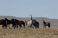 Wild horses in wide open places Stock Photos