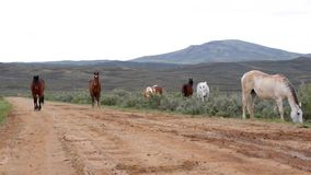 Wild Horses Wyoming stock video