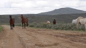Wild Horses Wyoming stock footage