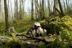 Wild Hout Stock Fotografie