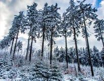 Wild hout in sneeuw royalty-vrije stock afbeelding