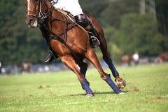 wild häst Royaltyfria Bilder