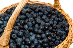 Wild huckleberry in a basket Royalty Free Stock Image