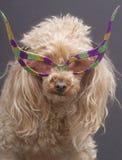 wild hundexponeringsglas Arkivfoto