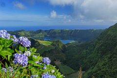 Lake of Seven Cities, Azores Island, Portugal. Wild hydrangeas flowers over Lake of Seven Cities, Azores Island, Portugal stock photo