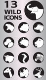 Wild icons collection Stock Images