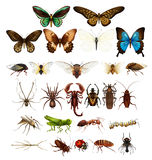 Wild insects in various types Stock Images
