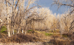 Wild and Intimate Area on the Colorado Prairie Royalty Free Stock Photos