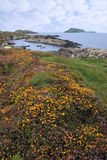 Wild irish flowers and scarriff islands Stock Image