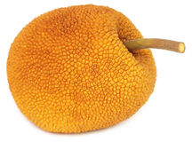 Wild jackfruit of Southeast Asia Royalty Free Stock Photography