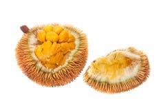 Wild jackfruit Stock Image