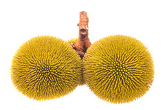 Wild jackfruit Royalty Free Stock Image