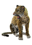 Wild Jaguar Stock Photo