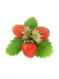 wild jordgubbar royaltyfri fotografi