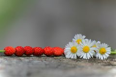 Wild jordgubbar Royaltyfria Bilder