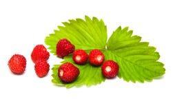 Wild jordgubbar Royaltyfria Foton