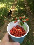 Wild jordgubbar i en kupa Royaltyfri Foto