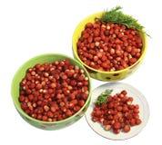 wild jordgubbe för bärplattasaucer Royaltyfri Bild