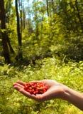 Wild jordgubbe i en räcka i det wild trät arkivbilder