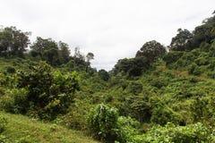 Wild jungle in Aberdare. Kenya. Africa Stock Photography
