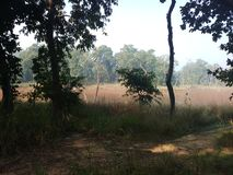 Wild jungle chitwan national park deep inside  kumal tal Stock Image