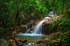 Wild jungle forest Stock Image
