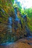 Wild jungle on the Lanta island, Krabi, Thailand. stock image