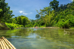 Wild jungle on the riverbanks Royalty Free Stock Images