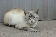 wild katt Arkivfoton