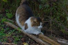 wild katt Royaltyfri Bild