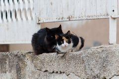 wild katter Fotografering för Bildbyråer