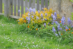 Wild kentish bluebells. Photo of wild kentish flowers and bluebells in country cottage garden Stock Photos