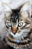 A wild kitten close-up Stock Photo